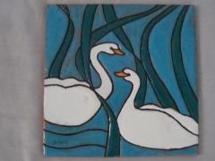 566-Cisnes