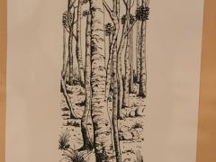 217-Árboles D